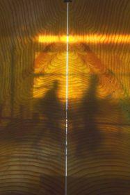 close up sequoia